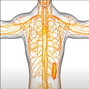 el sistema linfático del cuerpo