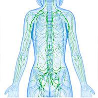 desintoxicar sistema linfatico