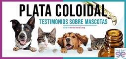 Plata coloidal testimonios sobre mascotas